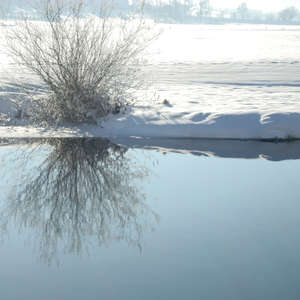 Image 25 - PHOTOS WATER, TREES & SNOW, JP Sergent