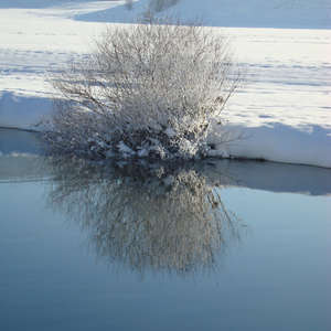 Image 34 - PHOTOS WATER, TREES & SNOW, JP Sergent