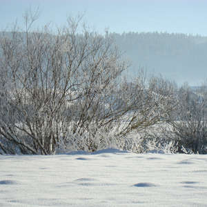 Image 2 - PHOTOS WATER, TREES & SNOW, JP Sergent