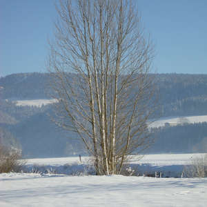 Image 3 - PHOTOS WATER, TREES & SNOW, JP Sergent