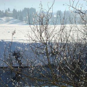 Image 10 - PHOTOS WATER, TREES & SNOW, JP Sergent