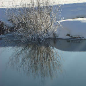 Image 66 - PHOTOS WATER, TREES & SNOW, JP Sergent