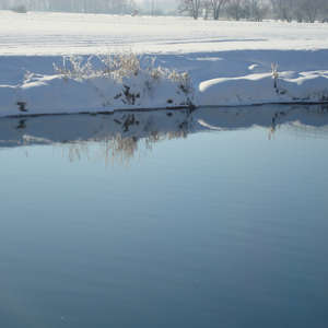Image 39 - PHOTOS WATER, TREES & SNOW, JP Sergent
