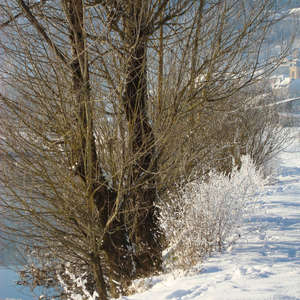 Image 47 - PHOTOS WATER, TREES & SNOW, JP Sergent