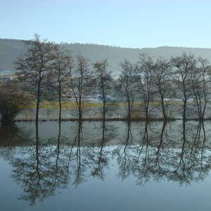 Image 95 - PHOTOS WATER, TREES & SNOW, JP Sergent