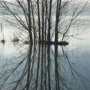Image 92 - PHOTOS WATER, TREES & SNOW, JP Sergent