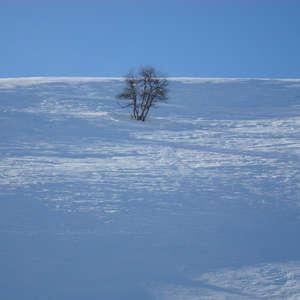 Image 112 - PHOTOS WATER, TREES & SNOW, JP Sergent