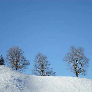 Image 108 - PHOTOS WATER, TREES & SNOW, JP Sergent