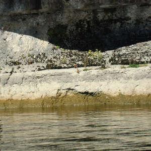 Image 296 - Jean-Pierre sergent, Water, Rocks, Trees & Flowers, April 2014, JP Sergent