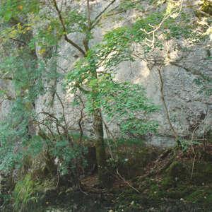 Image 368 - Jean-Pierre sergent, Water, Rocks, Trees & Flowers, April 2014, JP Sergent