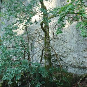 Image 370 - Jean-Pierre sergent, Water, Rocks, Trees & Flowers, April 2014, JP Sergent