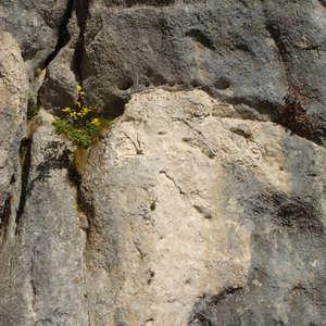Image 363 - Jean-Pierre sergent, Water, Rocks, Trees & Flowers, April 2014, JP Sergent