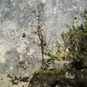 Image 315 - Jean-Pierre sergent, Water, Rocks, Trees & Flowers, April 2014, JP Sergent