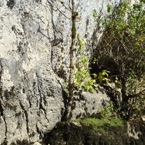 Image 319 - Jean-Pierre sergent, Water, Rocks, Trees & Flowers, April 2014, JP Sergent