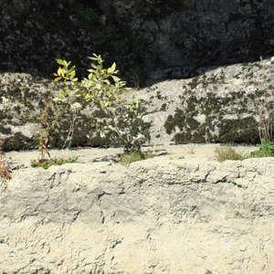 Image 303 - Jean-Pierre sergent, Water, Rocks, Trees & Flowers, April 2014, JP Sergent