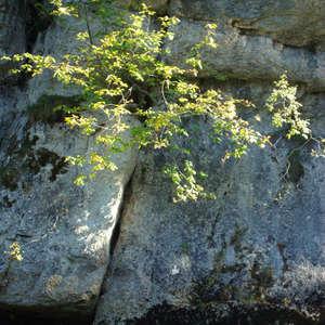 Image 349 - Jean-Pierre sergent, Water, Rocks, Trees & Flowers, April 2014, JP Sergent
