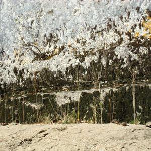 Image 345 - Jean-Pierre sergent, Water, Rocks, Trees & Flowers, April 2014, JP Sergent