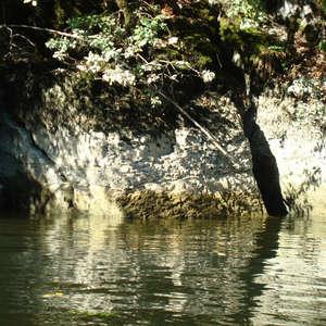 Image 330 - Jean-Pierre sergent, Water, Rocks, Trees & Flowers, April 2014, JP Sergent