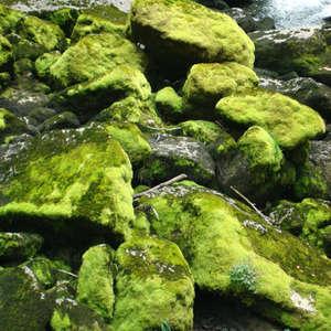 Image 127 - Jean-Pierre sergent, Water, Rocks, Trees & Flowers, April 2014, JP Sergent