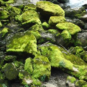 Image 124 - Jean-Pierre sergent, Water, Rocks, Trees & Flowers, April 2014, JP Sergent