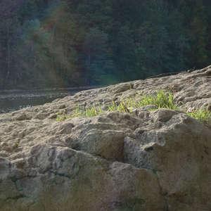 Image 379 - Jean-Pierre sergent, Water, Rocks, Trees & Flowers, April 2014, JP Sergent