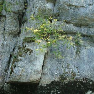 Image 371 - Jean-Pierre sergent, Water, Rocks, Trees & Flowers, April 2014, JP Sergent