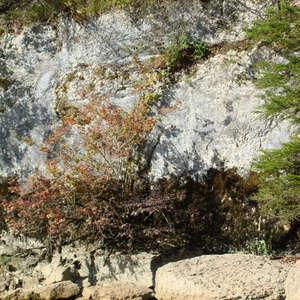 Image 376 - Jean-Pierre sergent, Water, Rocks, Trees & Flowers, April 2014, JP Sergent
