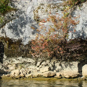 Image 374 - Jean-Pierre sergent, Water, Rocks, Trees & Flowers, April 2014, JP Sergent