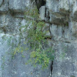 Image 373 - Jean-Pierre sergent, Water, Rocks, Trees & Flowers, April 2014, JP Sergent