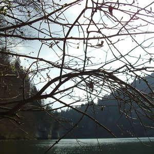 Image 27 - Jean-Pierre sergent, Water, Rocks, Trees & Flowers, April 2014, JP Sergent