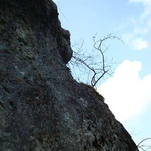 Image 2 - Jean-Pierre sergent, Water, Rocks, Trees & Flowers, April 2014, JP Sergent