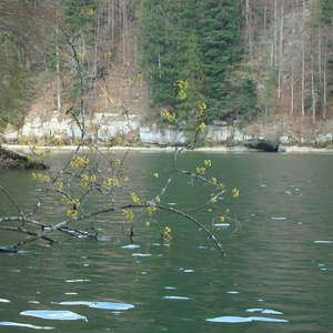 Image 6 - Jean-Pierre sergent, Water, Rocks, Trees & Flowers, April 2014, JP Sergent
