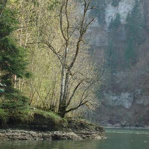 Image 13 - Jean-Pierre sergent, Water, Rocks, Trees & Flowers, April 2014, JP Sergent