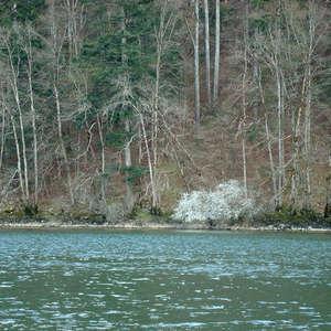 Image 54 - Jean-Pierre sergent, Water, Rocks, Trees & Flowers, April 2014, JP Sergent