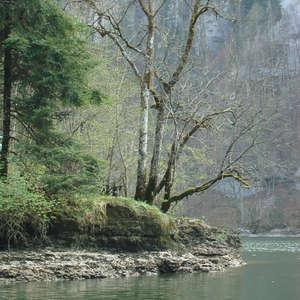 Image 11 - Jean-Pierre sergent, Water, Rocks, Trees & Flowers, April 2014, JP Sergent