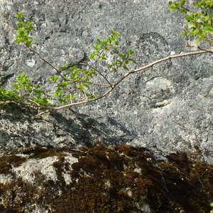 Image 17 - Jean-Pierre sergent, Water, Rocks, Trees & Flowers, April 2014, JP Sergent