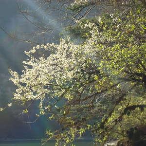 Image 15 - Jean-Pierre sergent, Water, Rocks, Trees & Flowers, April 2014, JP Sergent