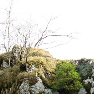 Image 76 - Jean-Pierre sergent, Water, Rocks, Trees & Flowers, April 2014, JP Sergent