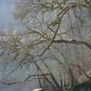 Image 77 - Jean-Pierre sergent, Water, Rocks, Trees & Flowers, April 2014, JP Sergent
