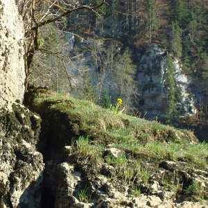 Image 122 - Jean-Pierre sergent, Water, Rocks, Trees & Flowers, April 2014, JP Sergent