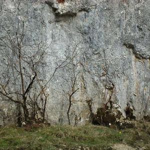 Image 61 - Jean-Pierre sergent, Water, Rocks, Trees & Flowers, April 2014, JP Sergent