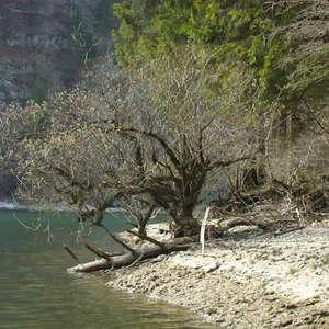 Image 59 - Jean-Pierre sergent, Water, Rocks, Trees & Flowers, April 2014, JP Sergent