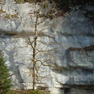 Image 89 - Jean-Pierre sergent, Water, Rocks, Trees & Flowers, April 2014, JP Sergent