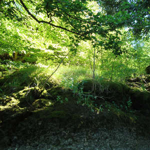 Image 255 - Jean-Pierre sergent, Water, Rocks, Trees & Flowers, April 2014, JP Sergent