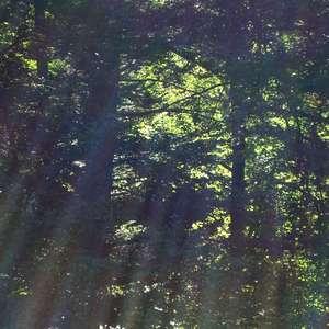 Image 226 - Jean-Pierre sergent, Water, Rocks, Trees & Flowers, April 2014, JP Sergent