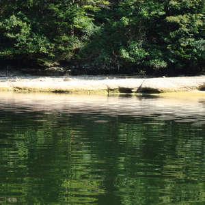 Image 30 - Jean-Pierre sergent, Water, Rocks, Trees & Flowers, 2015, JP Sergent