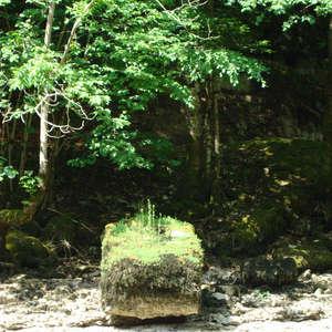 Image 22 - Jean-Pierre sergent, Water, Rocks, Trees & Flowers, 2015, JP Sergent