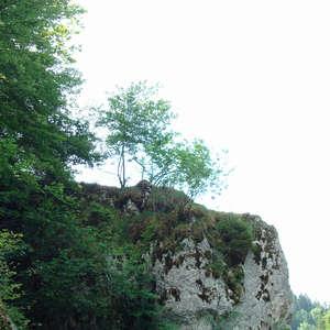 Image 25 - Jean-Pierre sergent, Water, Rocks, Trees & Flowers, 2015, JP Sergent