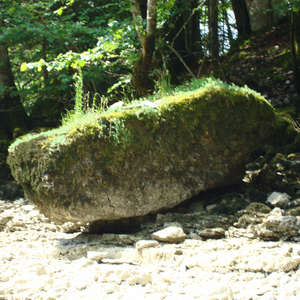 Image 23 - Jean-Pierre sergent, Water, Rocks, Trees & Flowers, 2015, JP Sergent