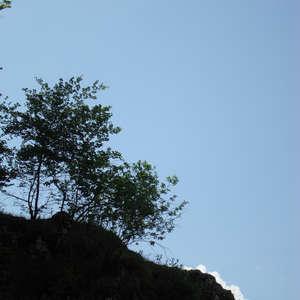 Image 27 - Jean-Pierre sergent, Water, Rocks, Trees & Flowers, 2015, JP Sergent